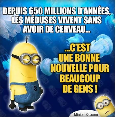 humour - Page 38 10600610
