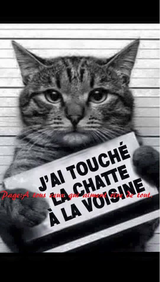 humour - Page 38 16184210