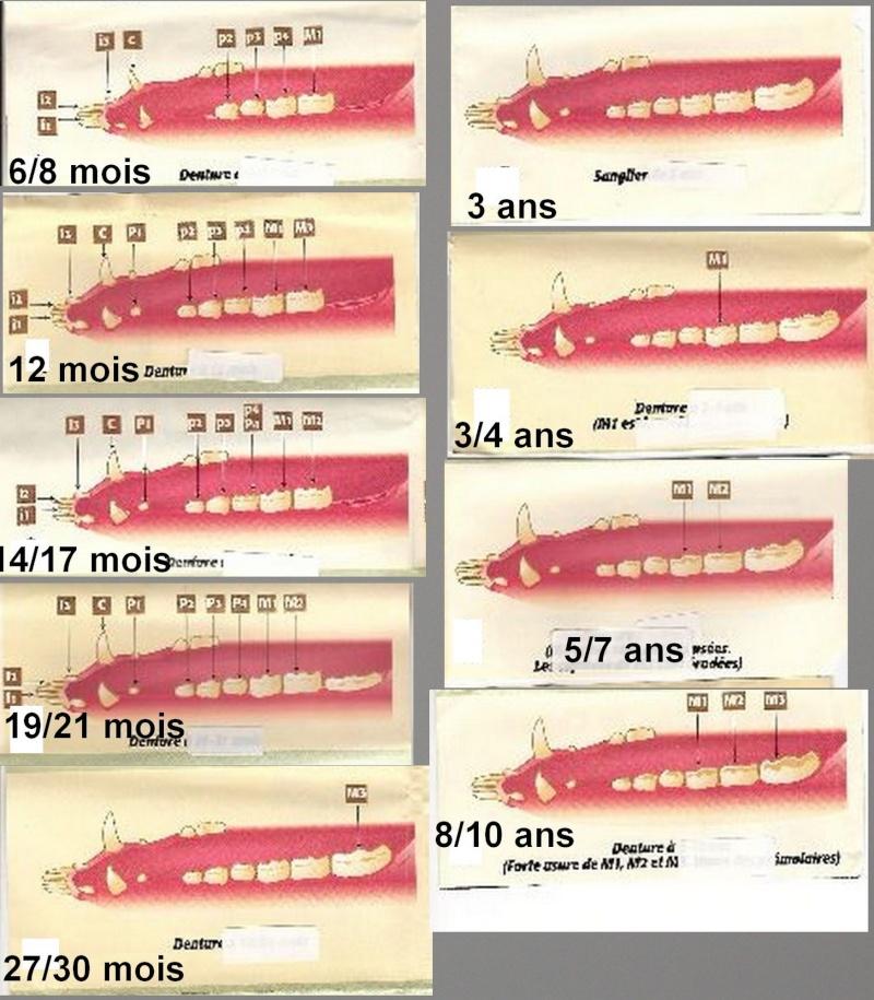 estimation age sanglier Age_sa10