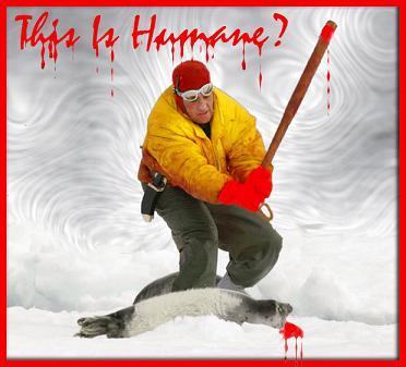 Interdisez tous les produits dérivés de phoques, STOP !!! Inhuma10