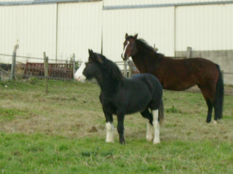 Une photo de vous et votre cheval - Page 3 1010