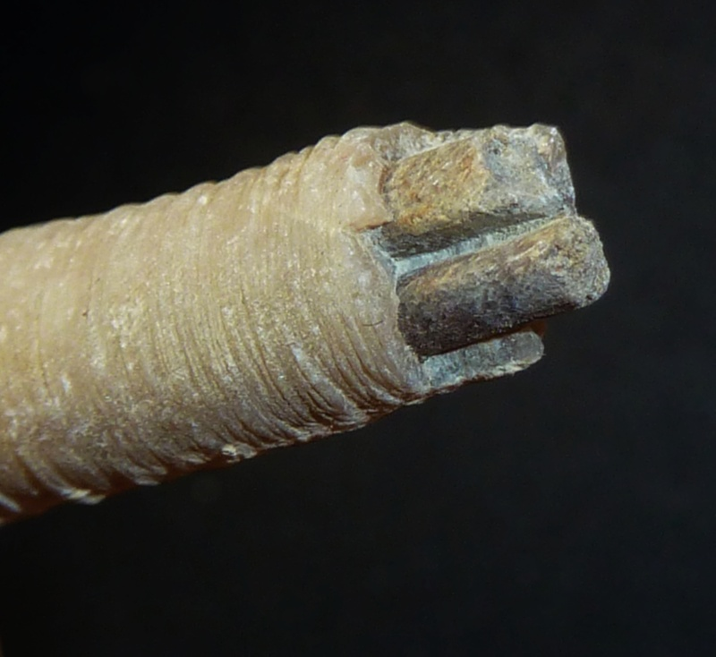 Ichnofossile du lutetien. Teredolites?  P1160011