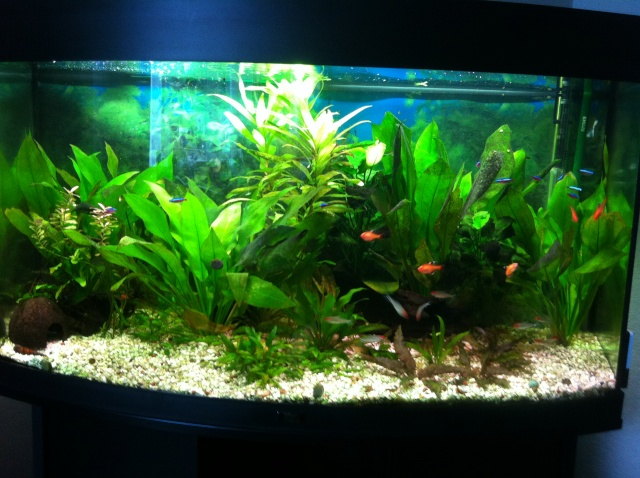 réfection de mon aquarium Photo10