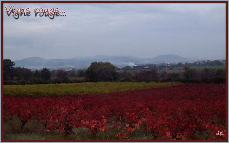 Wangen en automne Vigne_10