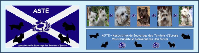 ASTE-Association de Sauvetage des Terriers d'Ecoss Bannie11
