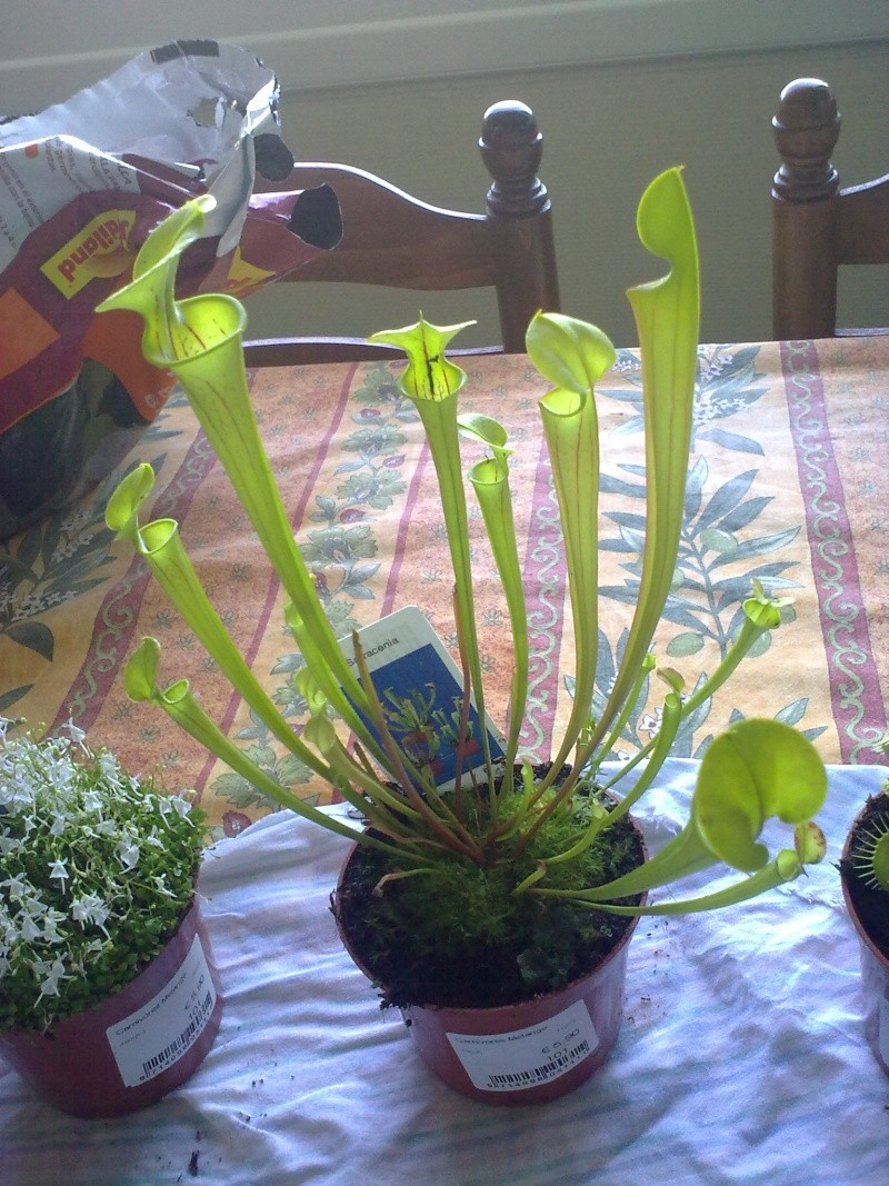 plantes carnivores 13082027