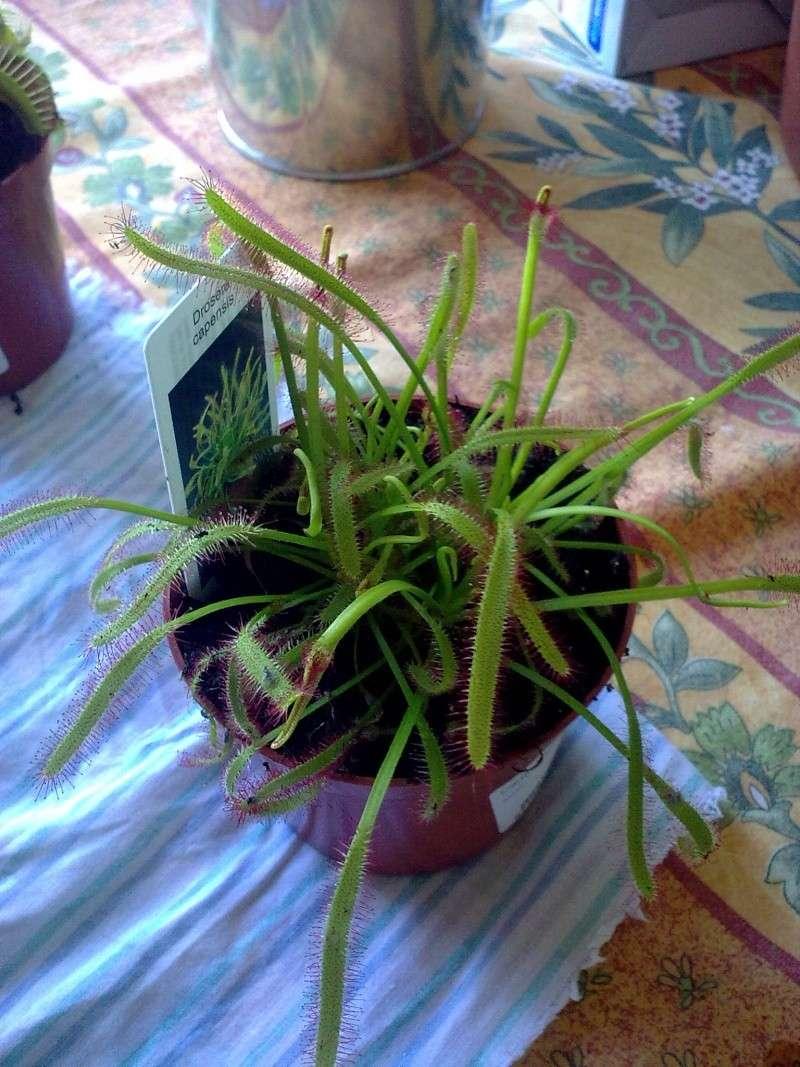 plantes carnivores 13082029