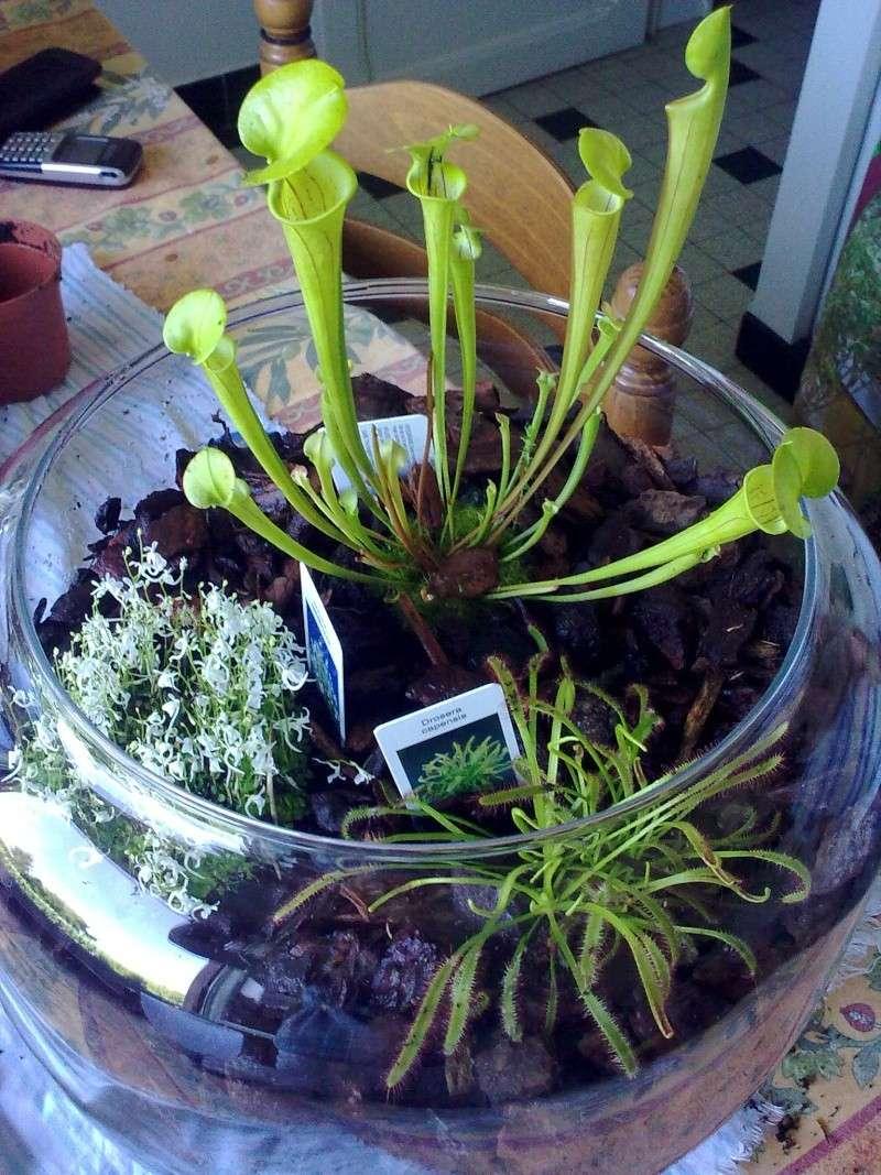plantes carnivores 13082030