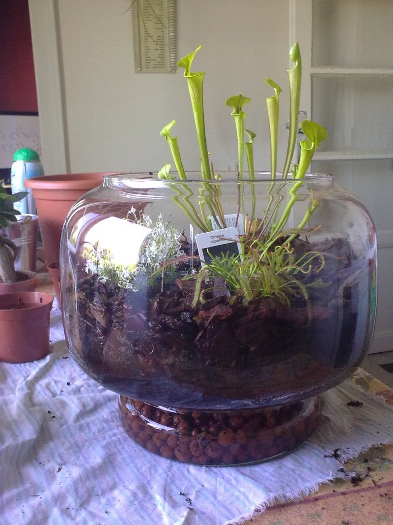 plantes carnivores 13082031