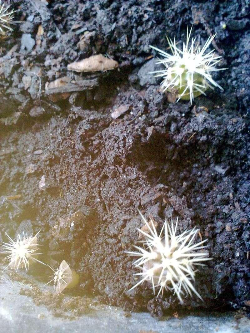 pousses de cactus 13092024