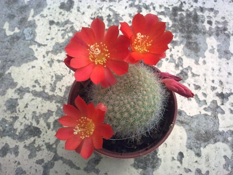 il n'arrete pas de fleurir 27062011