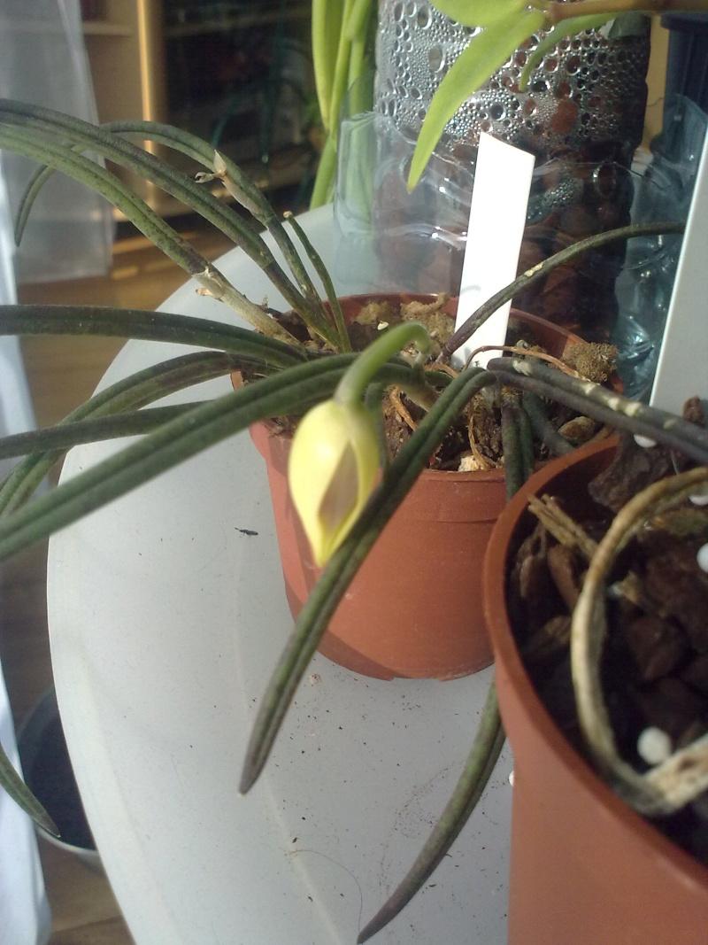 du nouveau dans mes orchidées 27092012