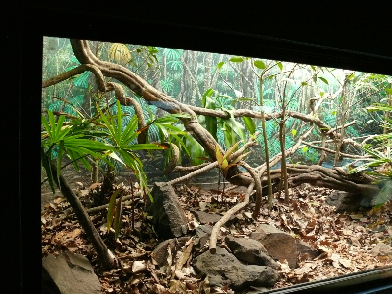 Les 3 viridis du zoo de Steve Irwin ! Terra10