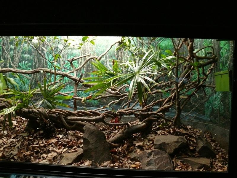 Les 3 viridis du zoo de Steve Irwin ! Terra110