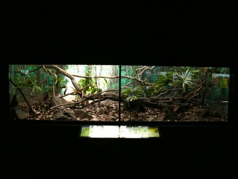 Les 3 viridis du zoo de Steve Irwin ! Terra310