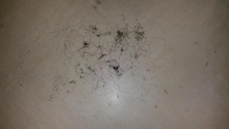 Cheveux cassants - Page 10 20160214