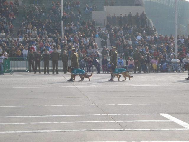 Parada Militar Chile 2009 (Preparatoria) Dsc04550