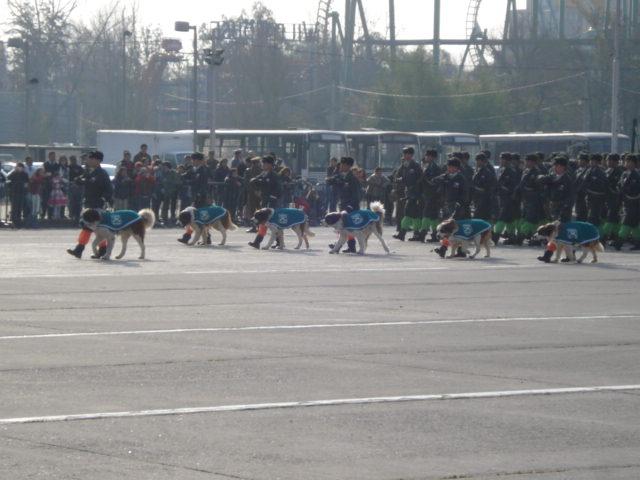 Parada Militar Chile 2009 (Preparatoria) Dsc04554