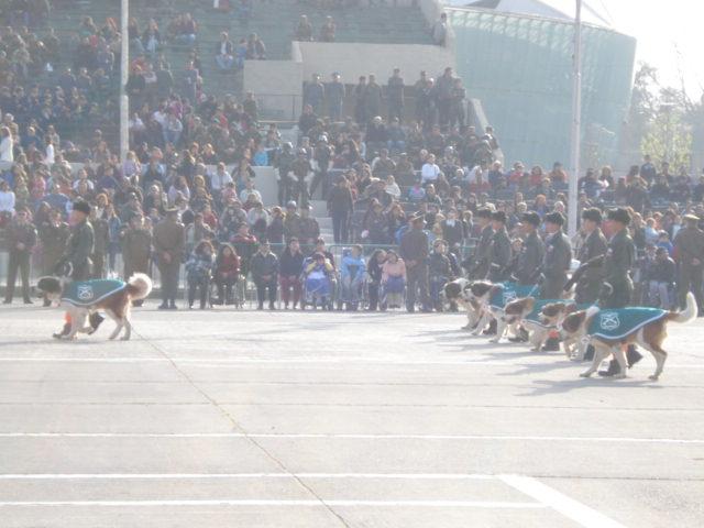 Parada Militar Chile 2009 (Preparatoria) Dsc04555