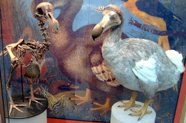 « La dodo lé la » [île de la Réunion] 1024px10