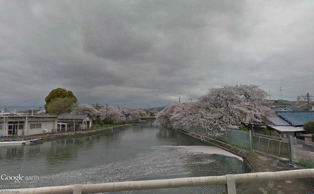 [Japon] - Les Sakuras 桜, les cerisiers symbole d'une nation Cerisi11