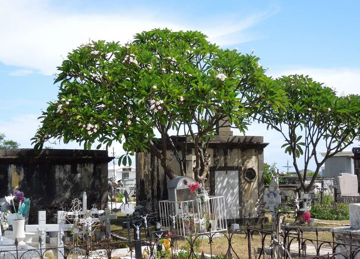 Le cimetière marin de Saint-Paul, la Réunion Dscn7416