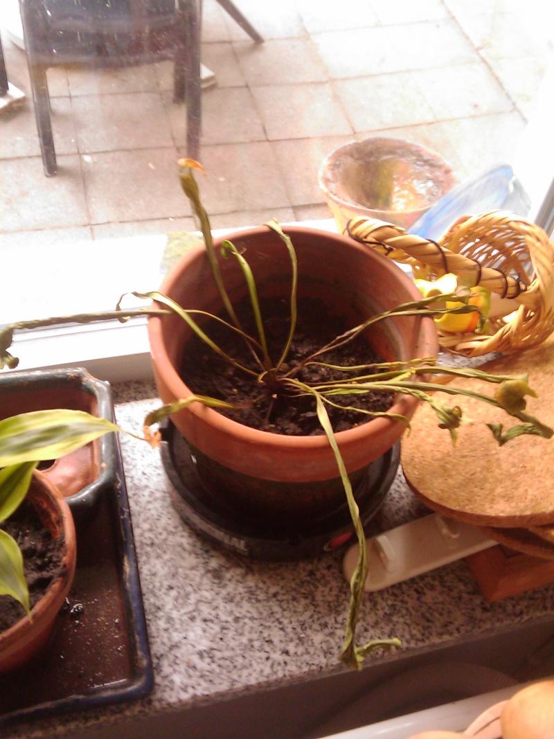 Mes plantes sont en train de mourir (si c'est pas déjà le cas...) Image_10