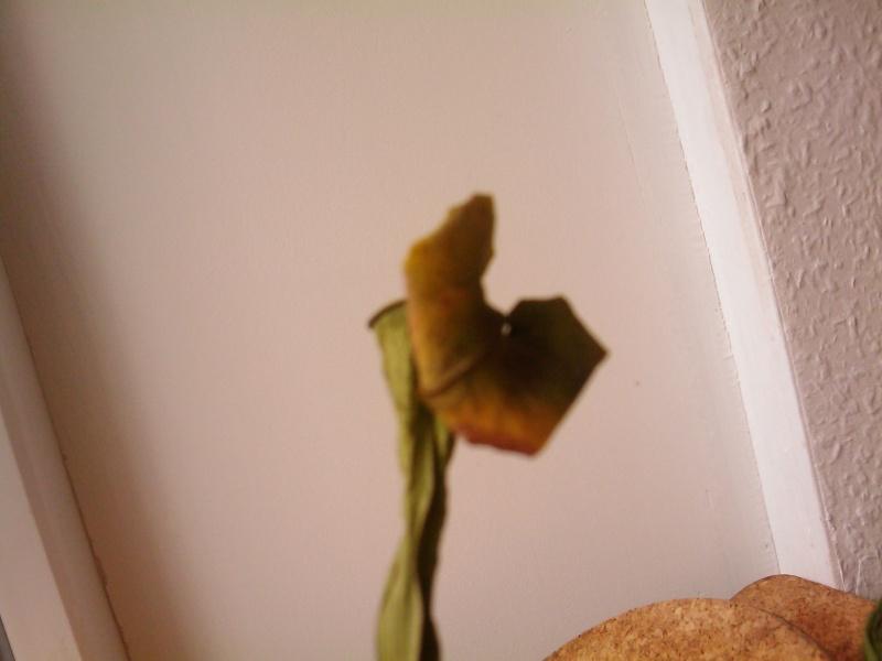 Mes plantes sont en train de mourir (si c'est pas déjà le cas...) Image_11
