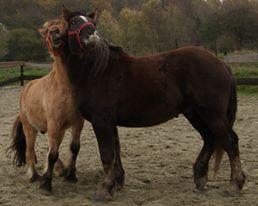 Dept 63, Bambou (ex Babar), Percheron/Comtois sauvé par Avallon !(Janvier 2012) - Page 19 Photo210