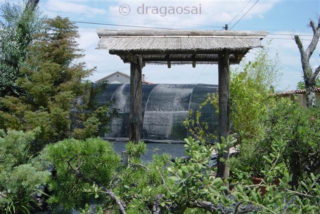 My garden Porta_10