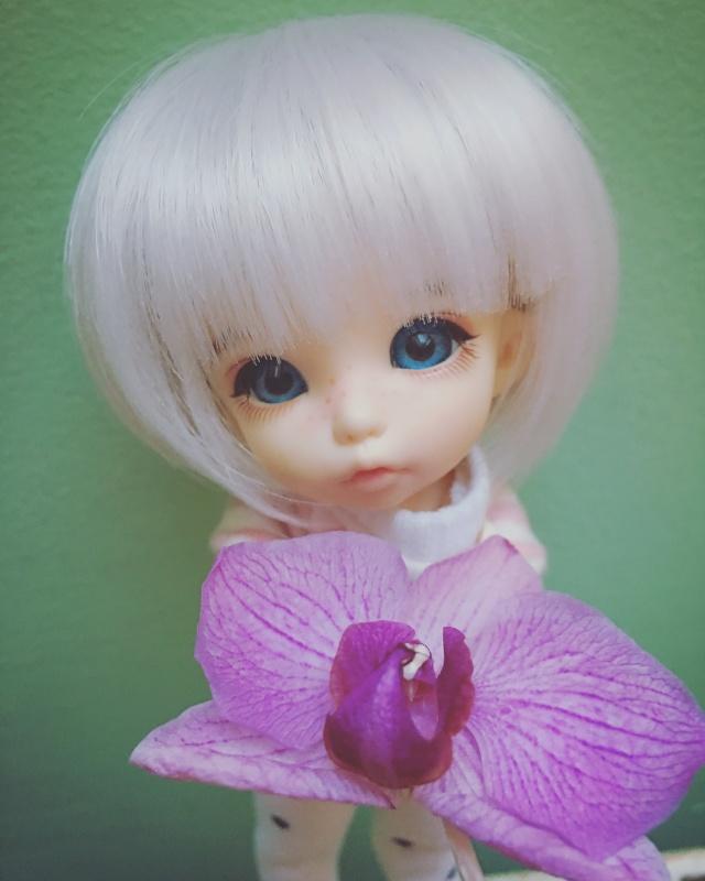 Pearl - Pukifee Ante Image18