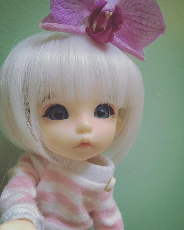 Pearl - Pukifee Ante Image19