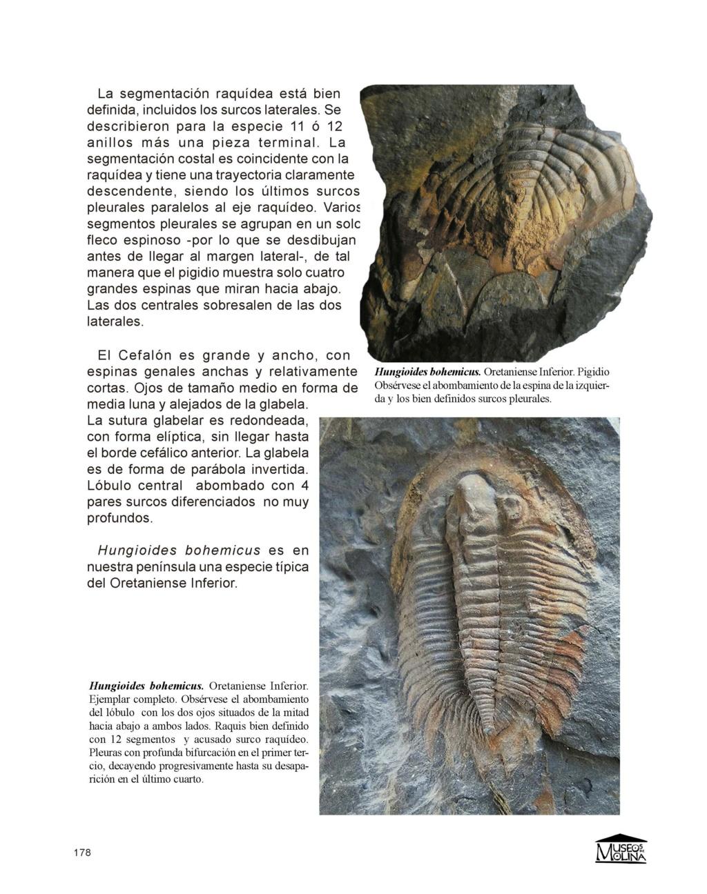 SEGUNDA EDICIÓN -  Guía de Trilobites del Ordovícico Medio de Castilla-La Mancha y Extremadura Fondos10