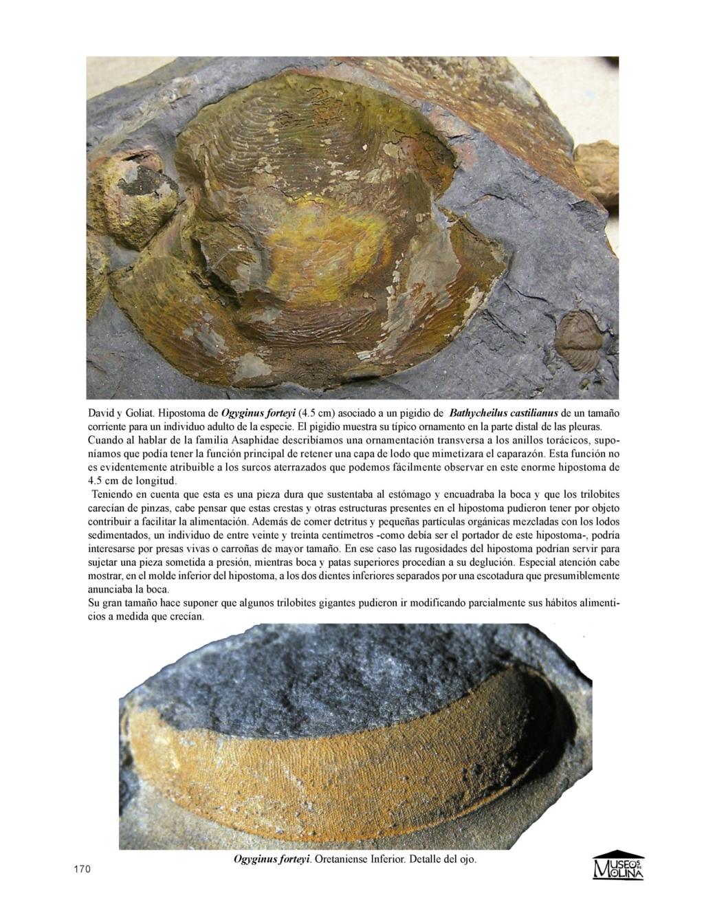 SEGUNDA EDICIÓN -  Guía de Trilobites del Ordovícico Medio de Castilla-La Mancha y Extremadura Fondos11