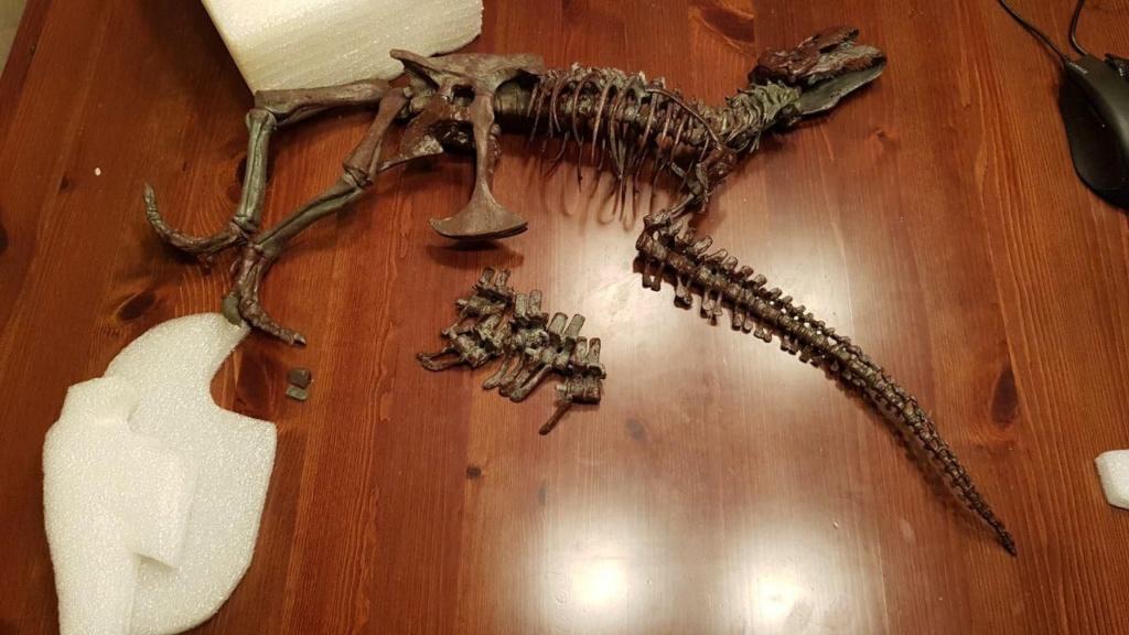 FIGURA - Esqueleto de Tyrannosaurus rex - Black beauty Photo_15