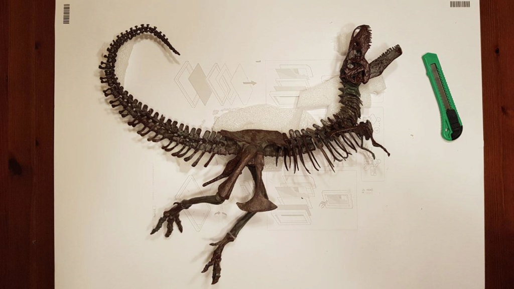 FIGURA - Esqueleto de Tyrannosaurus rex - Black beauty Photo_17