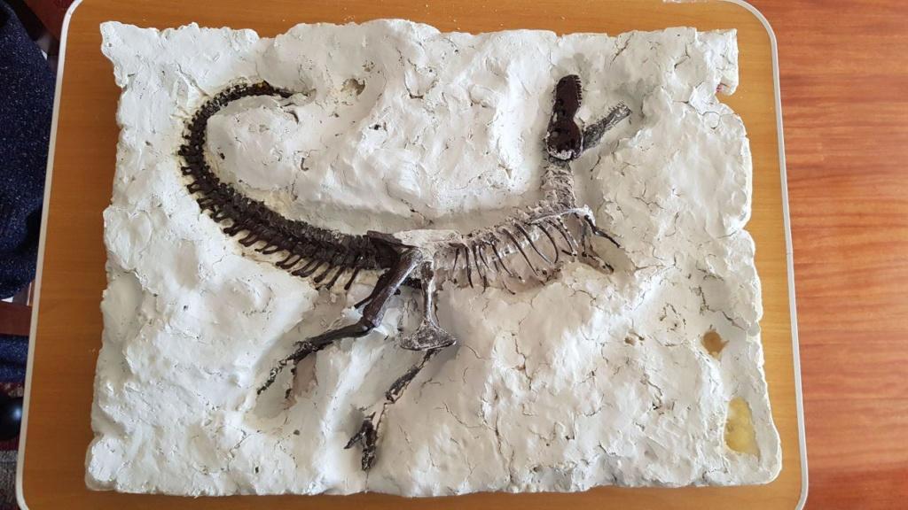 FIGURA - Esqueleto de Tyrannosaurus rex - Black beauty Photo_20