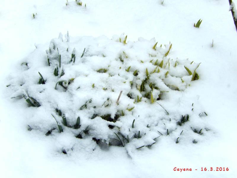 Vous avez dit printemps ...... ??? 2016-114