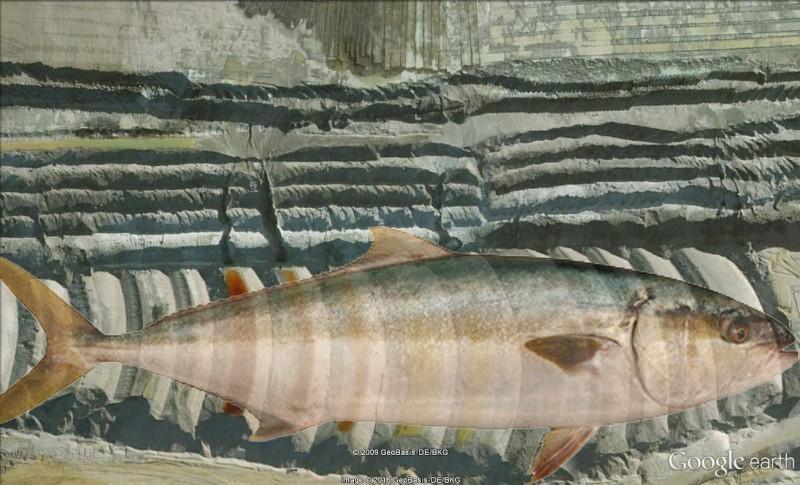Le Motard, le retour du poisson Google10
