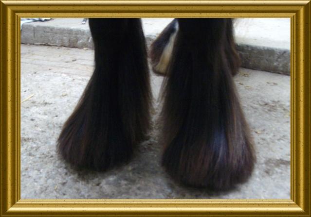 Boots à poils longs...idéal pour l'hiver car elles tiennent chaud... Imgp1010