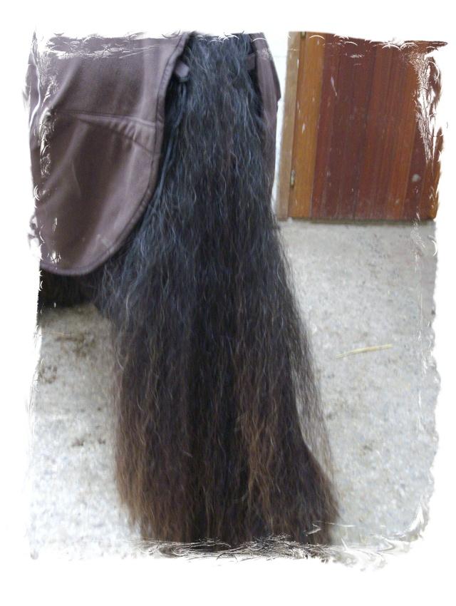 Boots à poils longs...idéal pour l'hiver car elles tiennent chaud... Imgp1011
