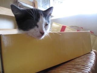 Petit chaton à donner ds le 10, très urgent !!!! [elzeltan] Img_1012