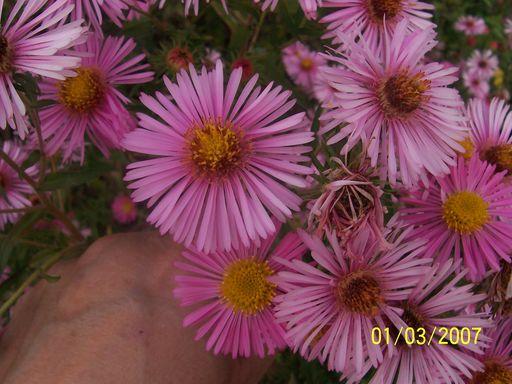 mes echanges Fleurs52