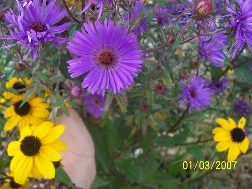mes echanges Fleurs53