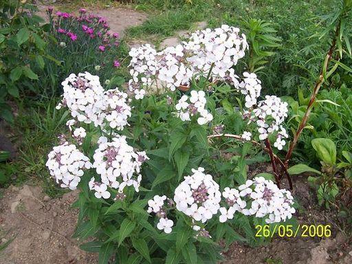 mes echanges Fleurs56