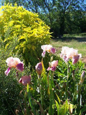 mes echanges Fleurs57