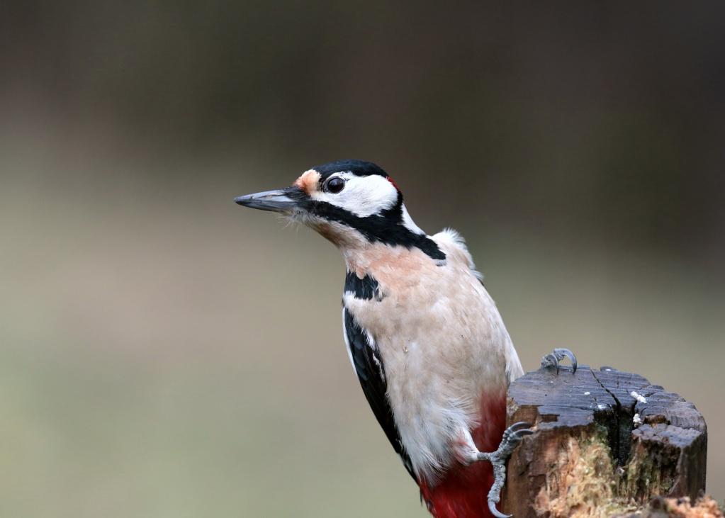 Oiseaux de nos forêts... 02410