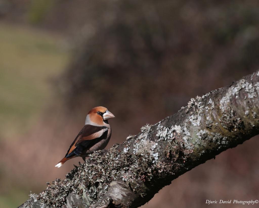Oiseaux de nos forêts... 03310