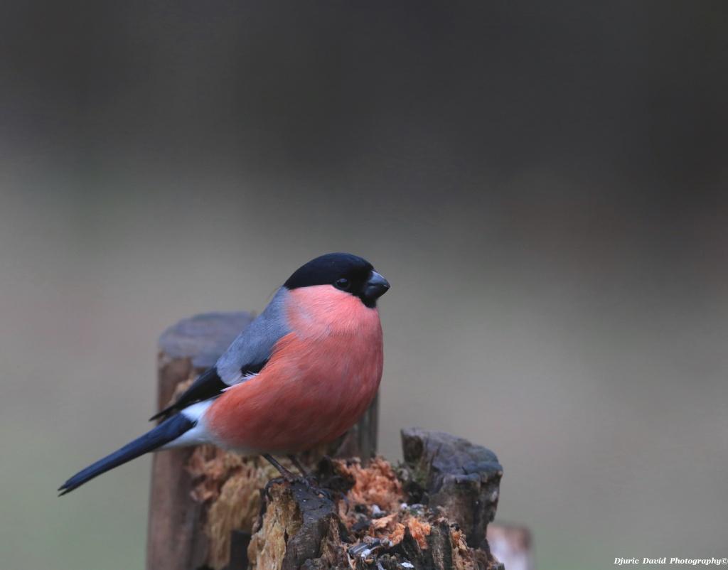 Oiseaux de nos forêts... 06610