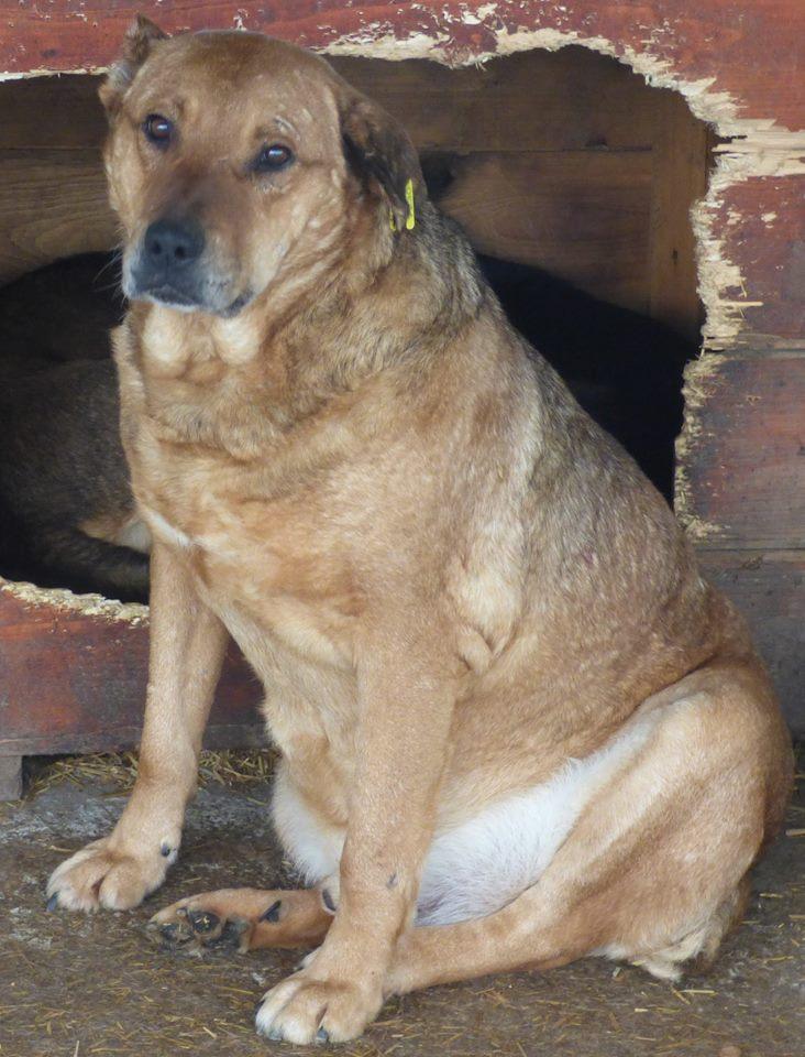 BALZAC - mâle croisé- taille moyenne né en 2008  (PASCANI) - en FA chez Yazou (Belgique) adopté par Cindy (Belgique) - Page 2 Balzac11